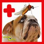 Dirofilariose et ver du cœur chez le chien (causes, symptômes, traitement)