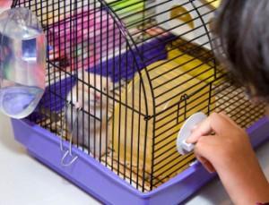 Comportement : stress et anxiété chez le hamster (causes, symptômes, solutions)