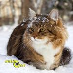 Santé : les risques liés à la neige et au froid pour nos chats et chiens