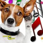 Comportement canin : quand la musique soigne...