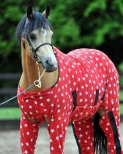 Accessoire : l'Onesie, un Pyjama pour chevaux ambiance cocooning