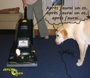 Education et comportement : l'influence des friandises, caresses et autres gratifications sur la peur chez le chien
