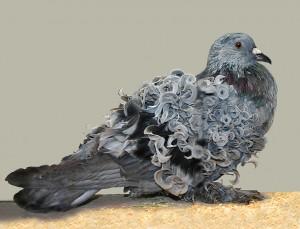Pigeons et colombes : y-a-t-il des différences ?
