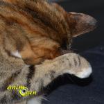 Peut-on se fier à nos chats pour connaître le temps qu'il fera demain ?