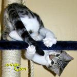 Comportement : pourquoi certains chats courent-ils après leur queue ? (causes, symptômes, solutions)