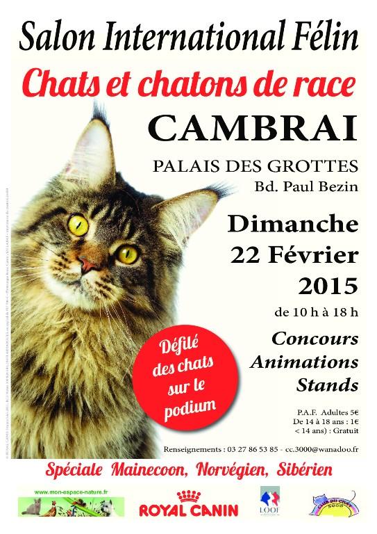 Salon International Félin à Cambrai (59), le dimanche 22 février 2015