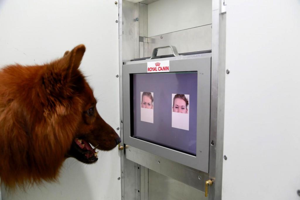 Science : sourire et colère, nos chiens identifient nos émotions