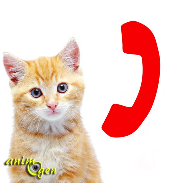 Santé : les numéros utiles pour nos chats en cas d'urgence
