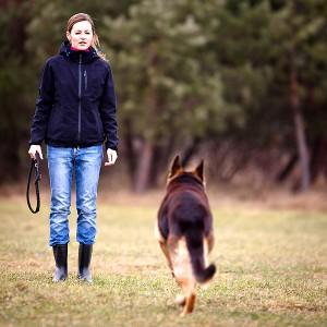 Education et comportement : pourquoi les chiens ne reviennent-ils pas quand on les appelle ?