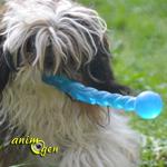 Jouet pour chien : le Kong Safestix (test, avis, prix)