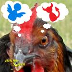 Comportement  : poules et agressivité, lorsqu'une histoire d'œuf tourne à l'omelette