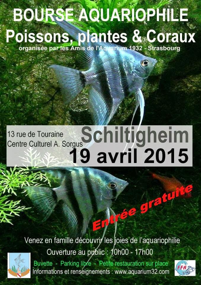 Bourse aquariophile poissons, plantes et coraux à Schiltigheim (67), le dimanche 19 avril 2015