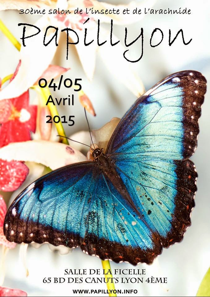 30 me salon de l insecte et de l arachnide papillyon lyon 69 du samedi 04 au dimanche - Tarif entree salon de l agriculture ...