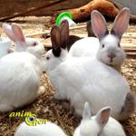Comment les rapports sociaux s'organisent-ils chez les lapins ?