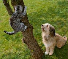 Instinct de prédation : que faire lorsqu'un chien poursuit tout ce qui bouge ?