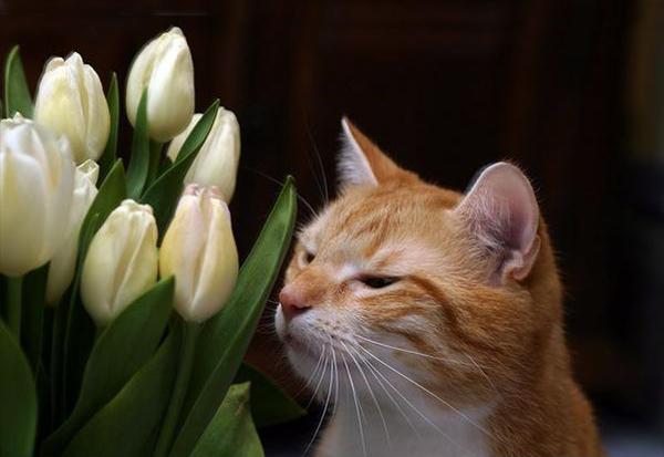 Comment décourager la mastication des fils électriques, cordons et plantes par les chats ?