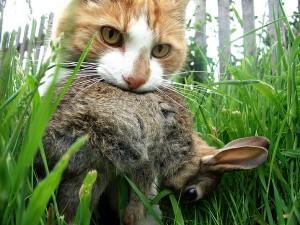 Comportement et territoire des chats à l'extérieur