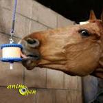 Jouet de foraging pour cheval : support à pierreLikit (test, avis, prix)