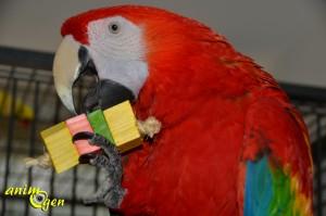 Jouet pour perroquet : fabriquez des sandwichs (tutoriel, test, avis, prix)