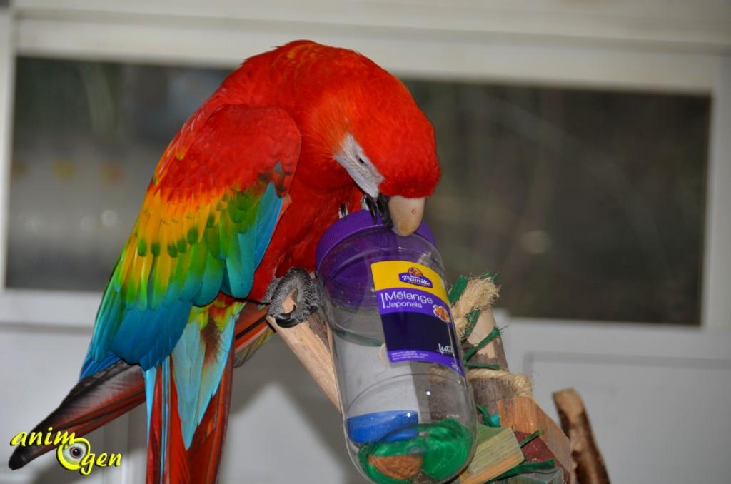 Jouet d'intelligence et de foraging pour perroquet à fabriquer en 1 minute (tutoriel, test, avis, prix)
