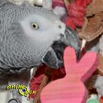 Jouets : des lapins à croquer pour vos rongeurs, lapins et perroquets (tutoriel, test, avis prix)