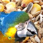 Alimentation : composer soi-même un mélange de graines pour grand perroquet