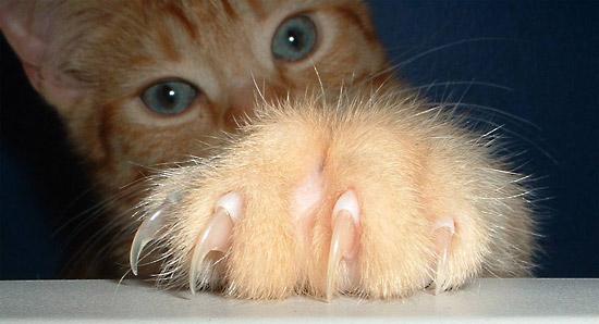 Santé : la maladie des griffes du chat (causes, symptômes et conséquences)