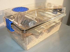 La souris de laboratoire, une popularité à bout de souffle