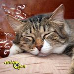 Santé : pourquoi, quand, comment vermifuger son chat ?