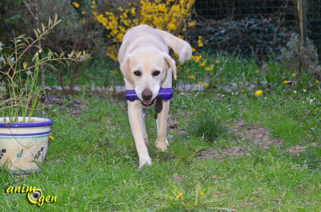 Jouet pour chien : Squeezz, de Kong (test, avis, prix)