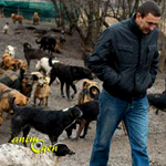 Serbie : un chômeur voue sa vie aux chiens errants