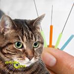 Santé : l'acupuncture au service du chat
