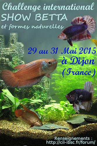 "Concours international de Betta splendens ""Show Betta"" à Dijon (21), du vendredi 29 au dimanche 31 mai 2015"