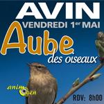 Aube des oiseaux à Avin (Hannut,Belgique), le vendredi 01 er mai 2015