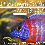 19 ème Congrès Cichlidés à Arlon (Belgique), le dimanche 03 mai 2015