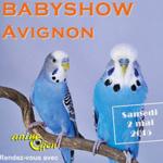 Babyshow (perruches ondulées) en Avignon (84), le samedi 02 mai 2015