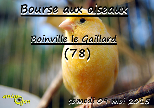 Bourse aux oiseaux à Boinville le Gaillard (78), le samedi 09 mai 2015