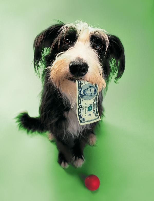 Société : le prix de l'amour, ou combien nous coûtent nos animaux de compagnie ?