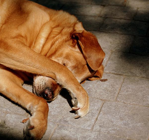 Santé : démangeaisons de la peau et du pelage chez le chien (symptômes et prévention)