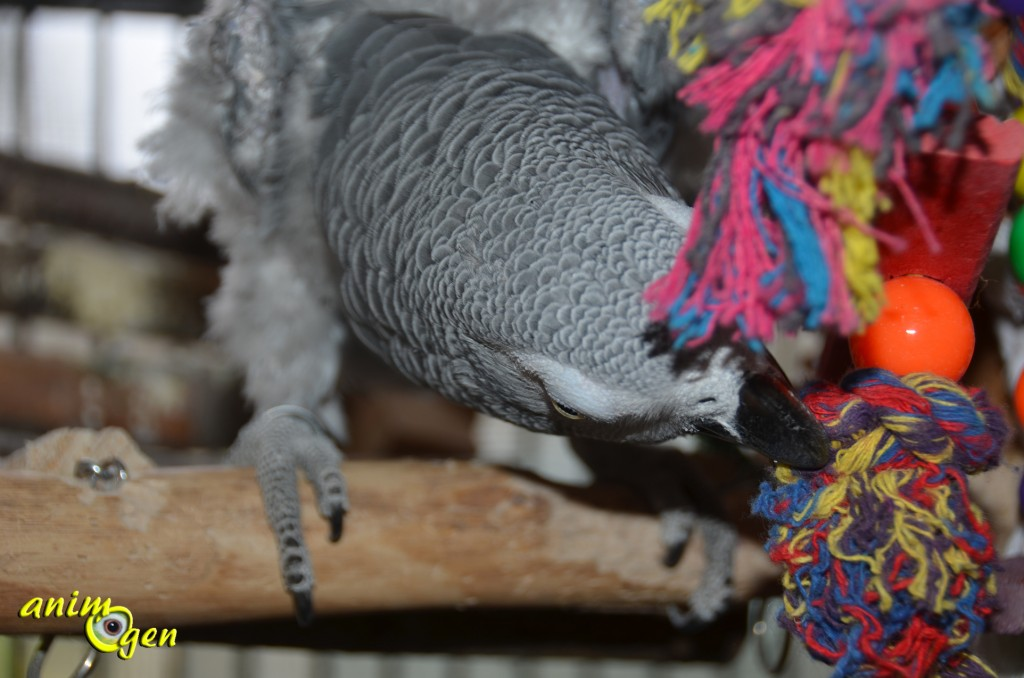 Education et comportement : pourquoi les perroquets sont-ils différents ?