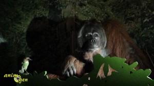 Sur la piste des grands singes, une aventure partagée