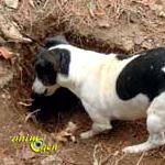 L'éducation d'un chien actif (conseils et méthode)