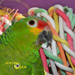 Jouet pour perroquets en raphia et osier naturel Bird's world, Karlie (test, avis, prix)