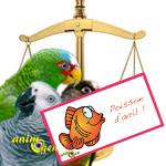 Législation : les perroquets mis à l'index en captivité