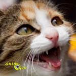 Comportement comment emp cher un chat de miauler sans - Comment empecher un chat de gratter a la porte ...