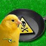 Les effets du téflon sur les canaris et autres oiseaux exotiques