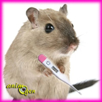 Santé : température corporelle idéale des rongeurs et lagomorphes