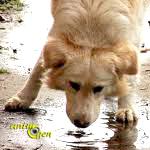 Santé : la leptospirose chez le chien (causes, symptômes, traitement)