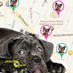 Oopet Love, une application gratuite d'Apple pour ne plus promener nos animaux seuls