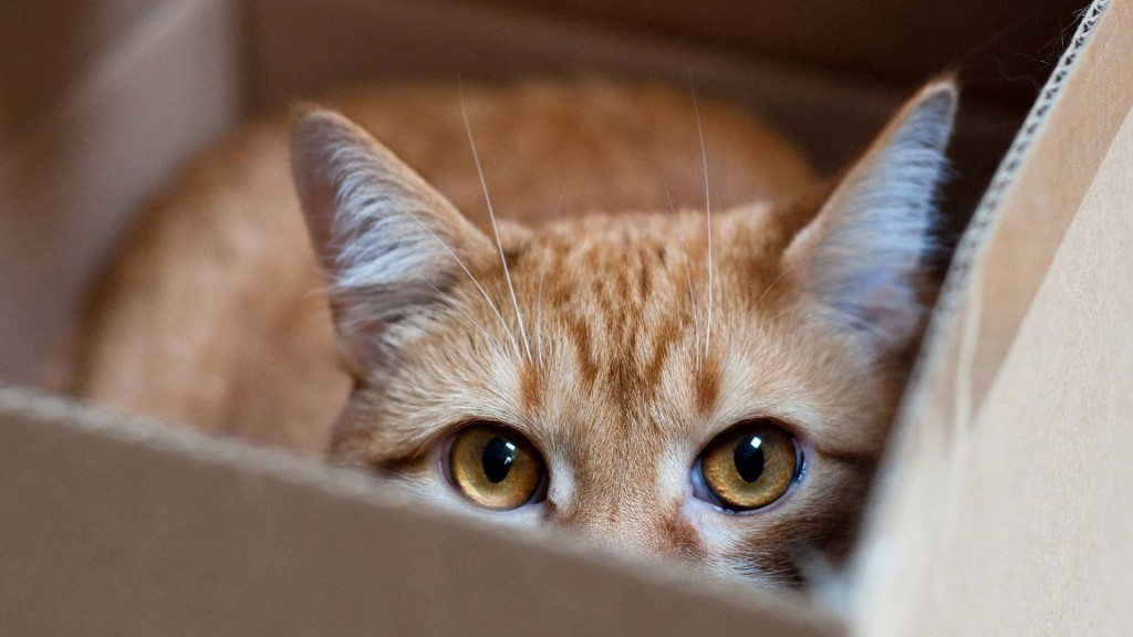 Les chats et les boîtes, une éternelle histoire d'amour : pourquoi ?